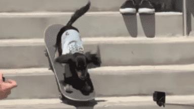 Un pequeño perrito salchicha enamoró a miles al montar una patineta.