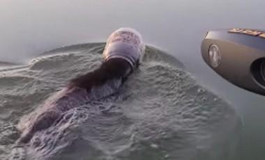 Familia rescata a oso que nadaba con un bote de plástico en la cabeza