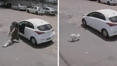 Desgarrador: Mujer abandona a perrito discapacitado en la calle