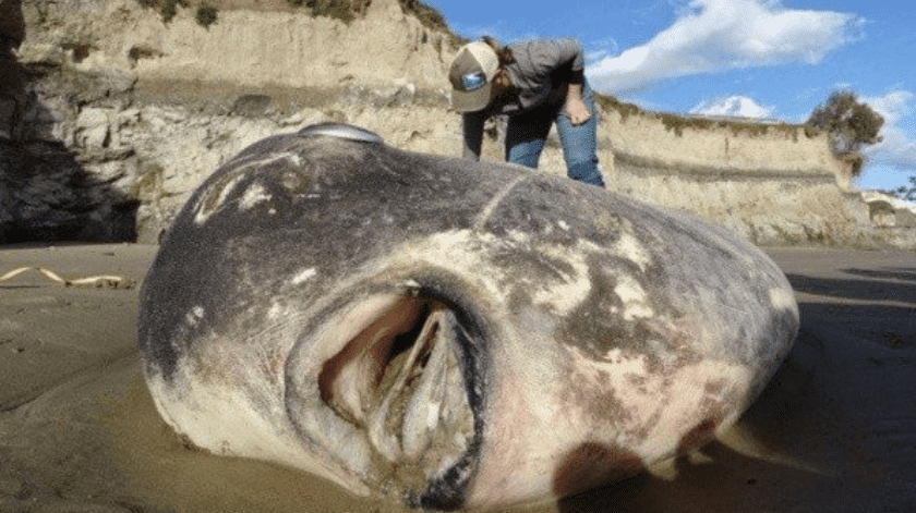 Pareja encuentra pez con extraña apariencia.(Ilustrativa/Twitter.)