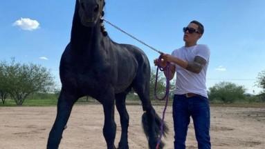 Un hermoso caballo negro fue el regalo que le hizo Saúl el Canelo Álvarez a Óscar Valdez.