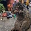 VIDEO: Encuentran una gigantesca rata en drenaje de la CDMX