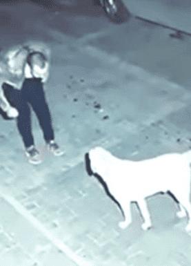 hombre borracho baila con un perro callejero ¡y termina adoptándolo!