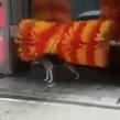VIDEO VIRAL: Perrito se baña en una máquina de un autolavado y causa sensación