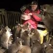 El hombre lleva más de 25 años alimentando a mapaches.