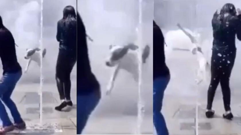 VIDEO VIRAL: Perrito sale volando al ser sorprendido por un chorro de agua al jugar en fuente(Captura de video)