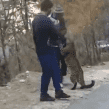 VIDEO VIRAL: Personas huyen al toparse con un leopardo, pero se pone a
