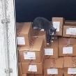 Gato sobrevive a 3 semanas dentro de un contenedor en alta mar comiendo bombones