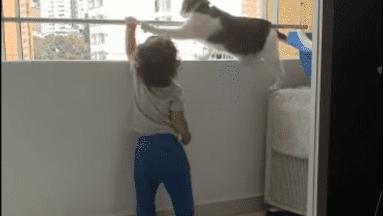 VIDEO: Gatito evita que un bebé escale un barandal de edificio