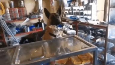 VIDEO VIRAL: Perrito sorprende al atender una refaccionaria
